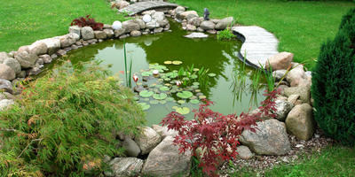 Водоем в саду: типичные ошибки любителей