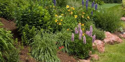 И осенью сады цветут: какие растения зацветают повторно
