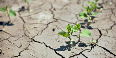 Садоводы могут повлиять на климат планеты