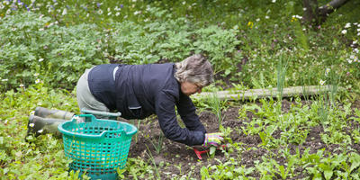 Ученые намерены выяснить, как лечиться садоводством