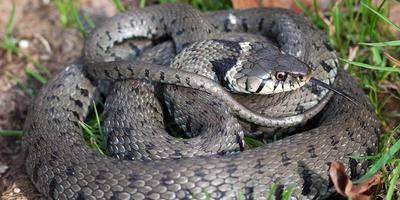 Как выбрать отпугиватель змей