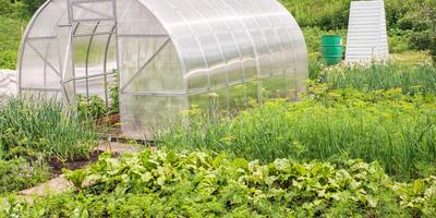 Парники и теплицы: особенности выращивания овощных культур в закрытом грунте