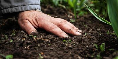 Удобрения и подкормки на огороде