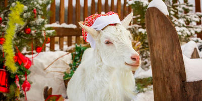 Новый год в Козляндии. Сказка