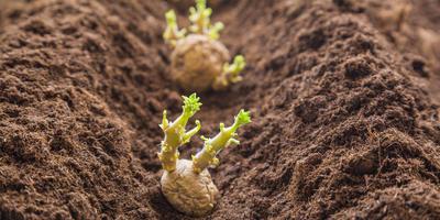 Свои семена, свои сорта... Как это сделать?