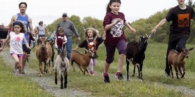 Козы, тележки и Южная Дакота