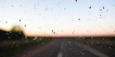 Долетались. Энтомологи обеспокоены резким уменьшением количества насекомых