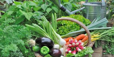 Поздравляем студентов Академии огородника с успешным окончанием первого курса!
