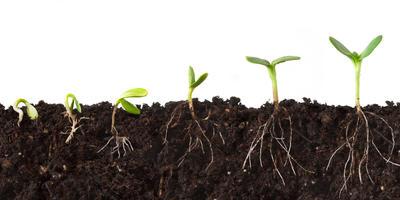 Стимуляторы роста: что это такое и как ими правильно пользоваться