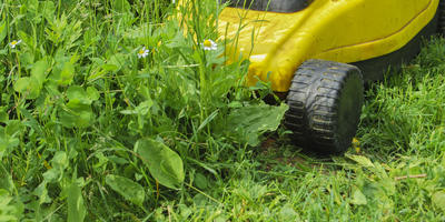 Какие функции газонокосилки сделают жизнь проще