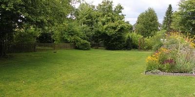Посадил и забыл: 15 растений для сада с минимальным уходом