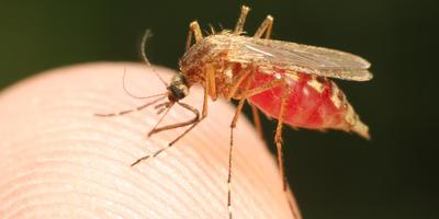 Чем опасны комары и как с ними бороться