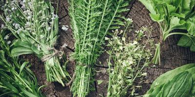 Какие лекарственные растения заготавливают в июне