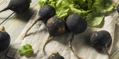 Рецепты здоровья: черная редька от радикулита и остеохондроза