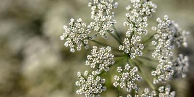 Пряные травы, которые заготавливают в июле, и их целебные свойства