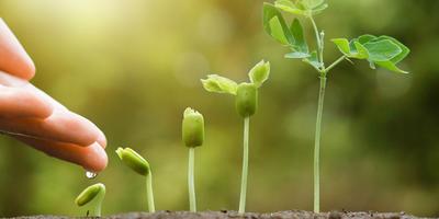 """Как вырастить чемпионов? """"Эпин"""", гуматы и другие стимуляторы вегетативного роста"""