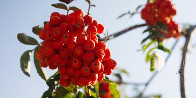 Какой бывает осень: глазами метеорологов и русских поэтов
