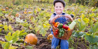 Итоги сезона. Уборка и хранение урожая