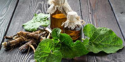 Рецепты здоровья: корни одуванчика и лопуха против болезней кожи и волос