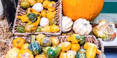 Как заготовить тыквенные семечки для еды и на посадку