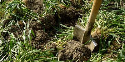 Сидераты - трава не простая, а золотая
