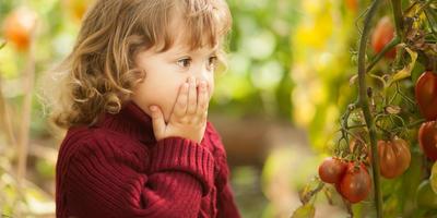 Почему возникают болезни растений и какие они бывают. Коротко о фитопатологии