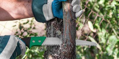 Как продлить жизнь старого плодового дерева. Омолаживание древних старцев