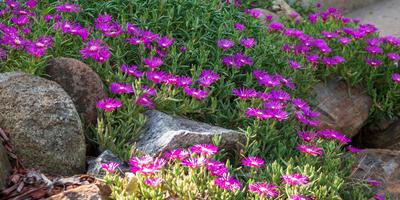 Стильный рокарий: какие растения посадить