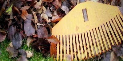 Уборка листьев в саду: как это сделать правильно и с пользой (видео)