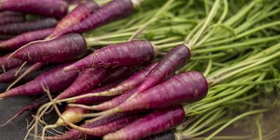 Знакомьтесь: фиолетовая морковь