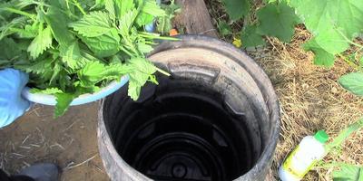 Удобрение из крапивы: как приготовить травяной настой