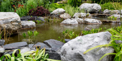 10 лучших многолетников для оформления водоёма