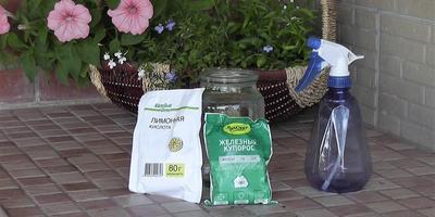 Хлороз растений: чем и как лечить