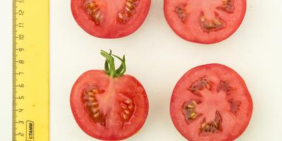 С томатом 'Лирика F1' без урожая не останетесь