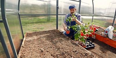 Посадка рассады томатов от А до Я