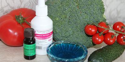 Зелёнка и нашатырный спирт: первая помощь дачным растениям