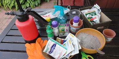 Борьба с болезнями и вредителями флоксов: как обойтись без химии