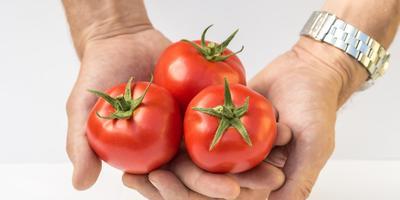 Ровненькие да румяные: знакомьтесь с раннеспелыми томатами 'Верочка F1' и 'Любаша F1'