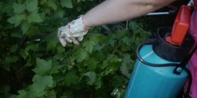 Надежный защитник моего сада - опрыскиватель Gardena