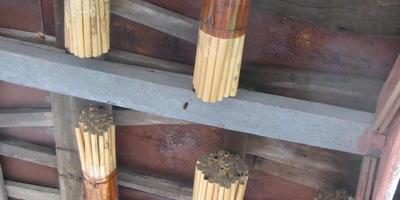 У кого есть опыт разведения пчел-осмий?