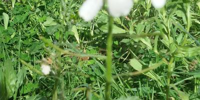 Помогите определить растения и кустарники