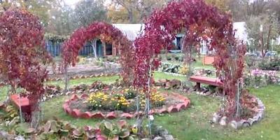 Сбор винограда в нашем саду