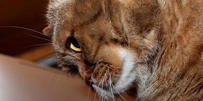 1 марта — Всемирный День котов и кошек