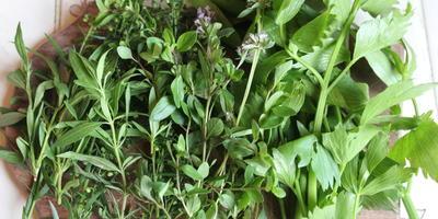 Майонез с травами и чесноком