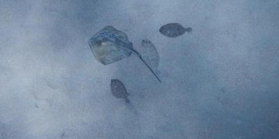 Подводные соседи по даче