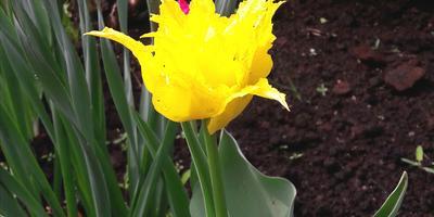 С наступлением весны!