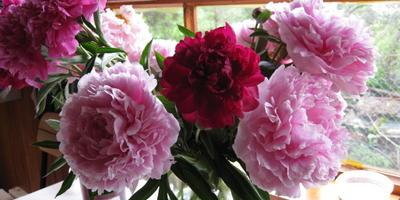 Домашняя работа №2. Плодовый сад весной: как защитить растения
