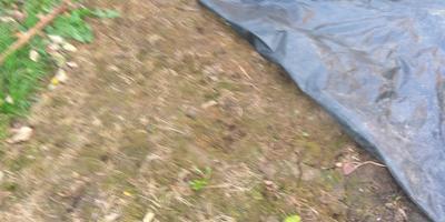Урок №8. Избавляемся от сорняков в саду и огороде