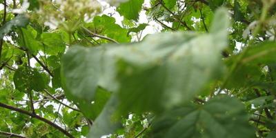 Домашняя работа №5. Как защитить плодовый сад весной и в начале лета. Как я чуть не потеряла калину
