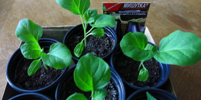 Мой первый опыт тестирования семян от Аэлиты